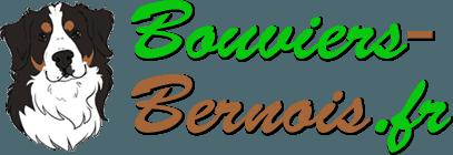 Bouvier Bernois - Portrait, caractère et qualités